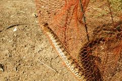 Serpent dans le piège Images libres de droits