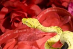 Serpent dans les roses Images libres de droits