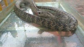 Serpent dans un réservoir banque de vidéos