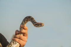 Serpent dans une main Photos stock