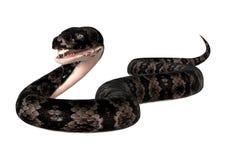 Serpent de Cottonmouth sur le blanc Photos stock