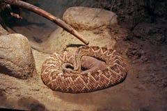 Serpent de ferraillement de dos en forme de losange Image stock