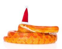Serpent de maïs de Creamsicle dans le chapeau rouge de Noël D'isolement sur le blanc Photos stock