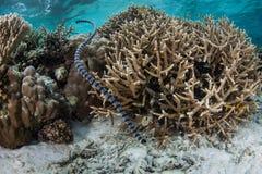 Serpent de mer réuni sur le récif Images stock