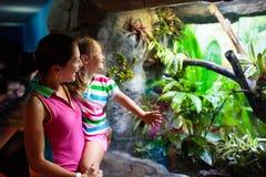 Serpent de observation de famille dans la mini-serre de zoo photo stock