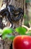 Serpent in de Tuin royalty-vrije stock foto's