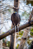 Serpent eagle with a killed serpent. Canon 6D 450mm ISO 800 1/400 f5.6 Serpent eagle seen with a Killed serpent stock photography