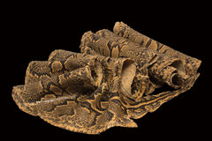 Serpent en cuir sur un fond noir Photographie stock libre de droits