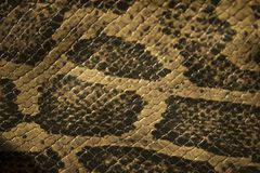 Serpent en cuir véritable et échelles la vue à partir du dessus photo stock