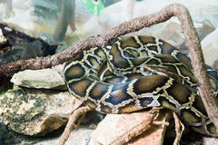 Serpent en Haifa Zoo photos libres de droits
