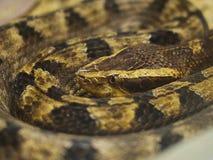 Serpent enroulé Image stock