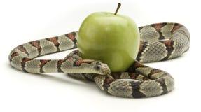 Serpent et Apple Photographie stock