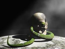 Serpent et crâne Image stock
