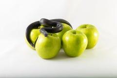 Serpent et pommes noirs de tentation Photographie stock libre de droits