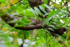 Serpent indien Image libre de droits