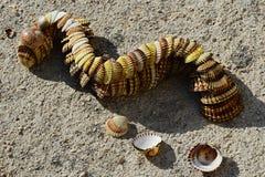 Serpent ou dragon décoratif fait de coquillages de palourde de mollusque bivalve placés sur le molo concret de plage photos stock