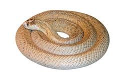 Serpent rond parfait Image stock