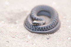 Serpent on sand Stock Photo