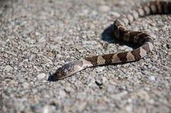 Serpent sur des pierres Photographie stock libre de droits