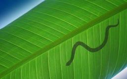 Serpent sur le congé Image stock