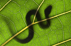 serpent sur une lame verte Photo stock