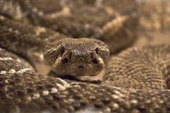 Serpent tiré dans le terrarium Photos libres de droits