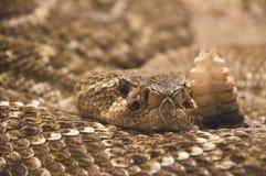 Serpent tiré dans le terrarium Image stock