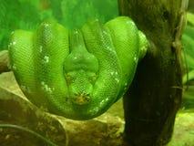 Serpent vert Images stock