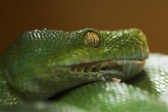 Serpent vert Image libre de droits