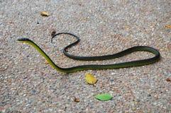 Serpent vert photo stock