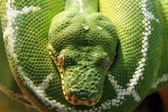 Serpent vert Images libres de droits