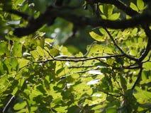 Serpent vert de l'Angola Photographie stock libre de droits