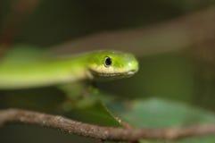 Serpent vert rugueux Images stock