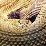 Serpente Foto de Stock