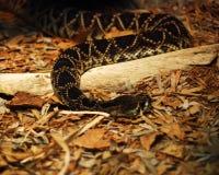 Serpente fotos de stock royalty free