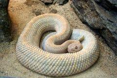 Serpente arrotolato Fotografie Stock