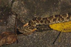 Serpente che striscia su una roccia fotografia stock