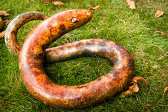 Serpente da abóbora Fotografia de Stock Royalty Free