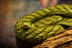 Serpente da mamba verde enrolado no log da árvore Fotos de Stock