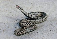 Serpente da neve Foto de Stock