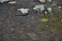 Serpente de água foto de stock royalty free