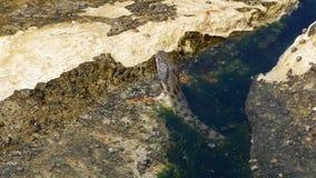 Serpente de água na costa video estoque