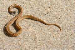 Serpente de Brown Fotos de Stock Royalty Free