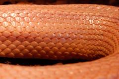 A serpente de grama é na muda - Ringelnatter Fotos de Stock Royalty Free