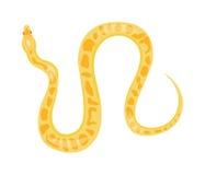 Serpente del boa del pitone Fotografia Stock