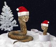 Serpente del gatto e nuovo anno 2 fotografia stock libera da diritti
