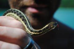 Serpente della holding dell'uomo Fotografia Stock Libera da Diritti