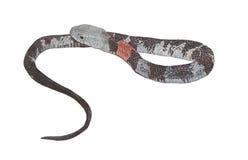 serpente della Rame-lumaca Immagine Stock Libera da Diritti