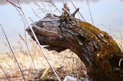 Serpente di legno Fotografia Stock