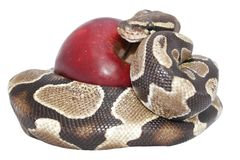 Serpente e Apple imagem de stock royalty free